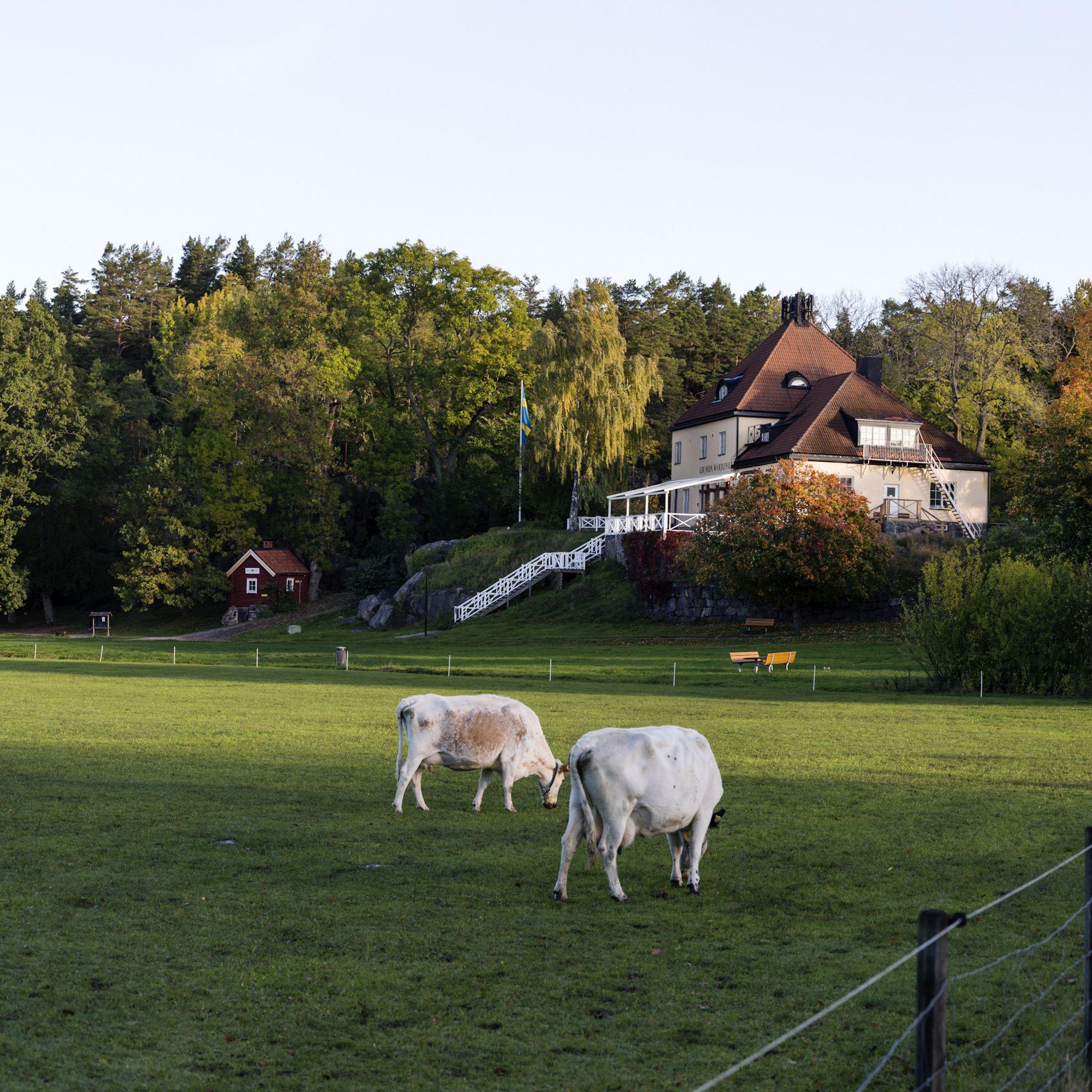 Grinda Panorama 5